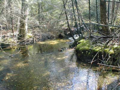 neighboring brook