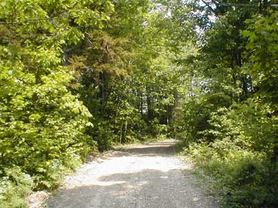 view up driveway in summer